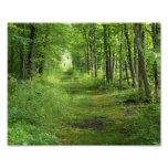 Trayectoria entre los árboles impresión fotográfic