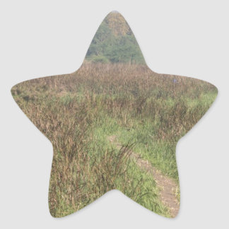 Trayectoria estrecha a través de la hierba alta pegatinas forma de estrella personalizadas