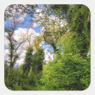 Trayectoria Overgrown del arbolado Calcomanía Cuadrada