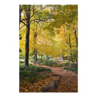 Trayectoria que camina del otoño cojinete