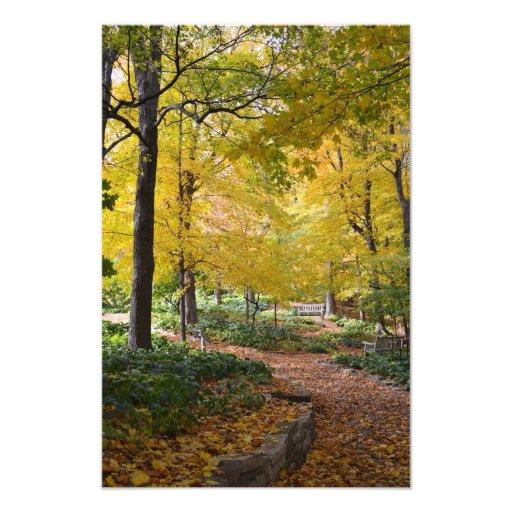Trayectoria que camina del otoño impresiones fotográficas