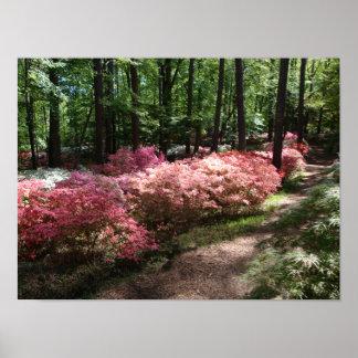 Trayectoria rosada del arbolado de las azaleas poster