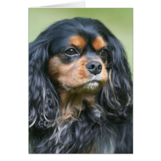Treasuring Our Friendship Cavalier King Charles Greeting Card