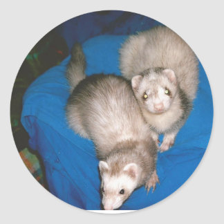 treat Ferrets Classic Round Sticker