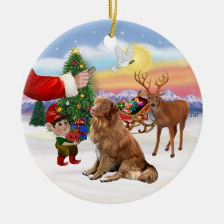 Treat for a Nova Scotia Duck Tolling Retriever Christmas Ornaments