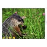 Trébol-consumición de la tarjeta de Groundhog