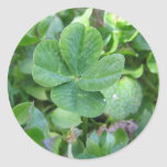 Trébol de cuatro hojas pegatina redonda