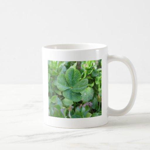 Trébol de cuatro hojas tazas de café