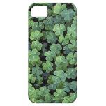 Trébol de la hoja de Irlanda de la naturaleza iPhone 5 Case-Mate Fundas