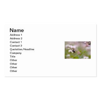 Trébol de polinización de la abeja tarjetas de visita