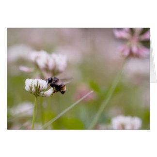 Trébol de polinización de la abeja tarjeta pequeña