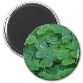 Tréboles célticos irlandeses imán redondo 5 cm