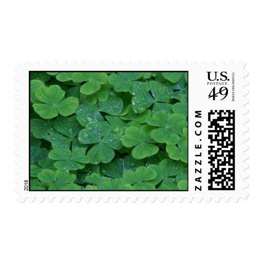 Tréboles cubiertos de rocio timbres postales