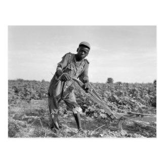 Trece-año viejo arando un campo en Georgia Postales