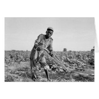 Trece-año viejo arando un campo en Georgia Tarjeton