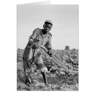 Trece-año viejo arando un campo en Georgia Tarjetón