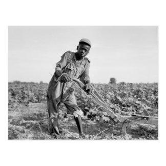 Trece-año viejo arando un campo en Georgia Tarjeta Postal