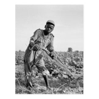 Trece-año viejo arando un campo en Georgia Tarjetas Postales