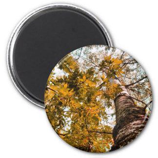 tree-2 2 inch round magnet