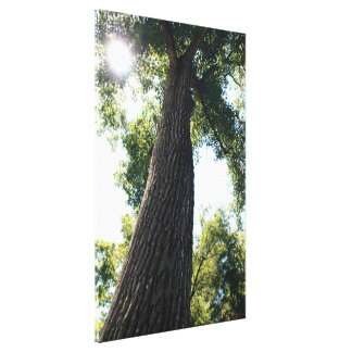 Tree #6858 Canvas Print