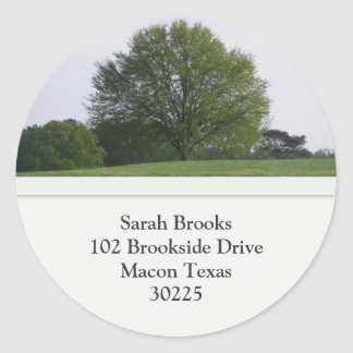 Tree Address Labels Classic Round Sticker