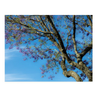 Tree against blue sky postcard