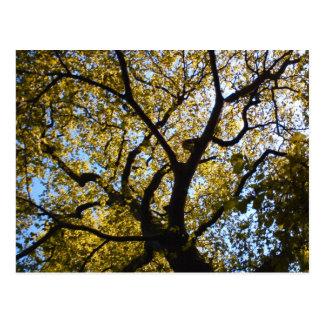 Tree against blue sky. postcard