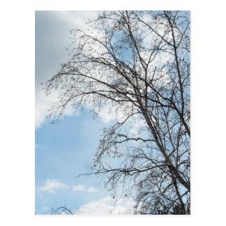 Tree Against Sky Colossians 3:1-2 Postcard