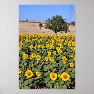 Tree among sunflowers poster