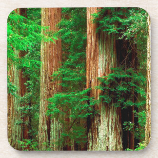 Tree Ancient Giants Redwoods Beverage Coaster