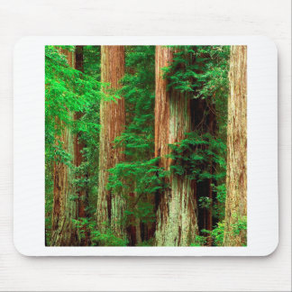 Tree Ancient Giants Redwoods Mouse Pad