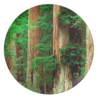 Tree Ancient Giants Redwoods Plate