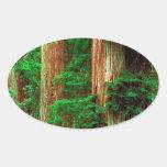 Tree Ancient Giants Redwoods Sticker
