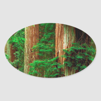 Tree Ancient Giants Redwoods Oval Sticker