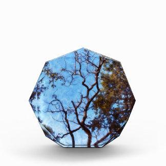 Tree and blue sky award