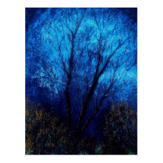 Tree and Blue Sky, Evening. Postcard