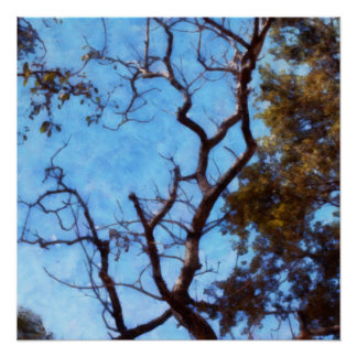 Tree and blue sky poster