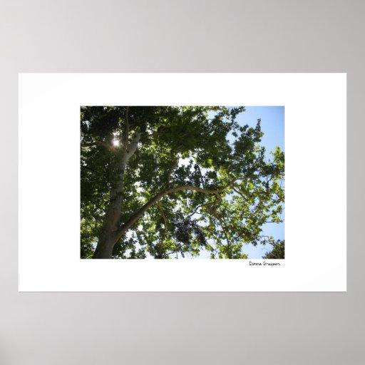 Tree and blue Sky Print