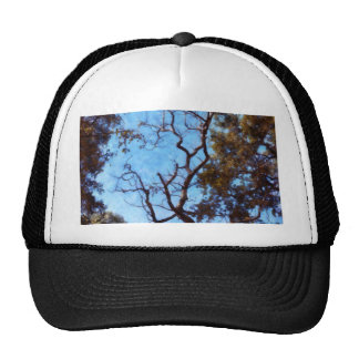 Tree and blue sky trucker hat