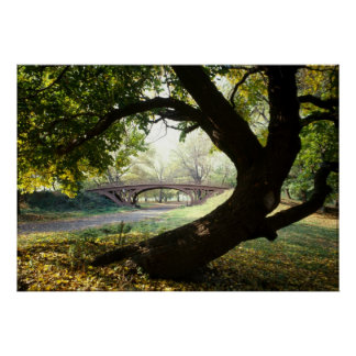 Tree and Bridge in Central Park Poster