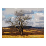 Tree and Distant Hills Poster