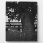 Tree and Dock by the Water Photo Plaques