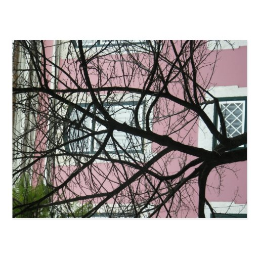 Tree And House Postcard