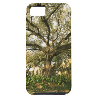 Tree and landscaping in San Antonio, Texas iPhone SE/5/5s Case
