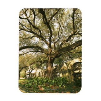 Tree and landscaping in San Antonio, Texas Rectangular Photo Magnet