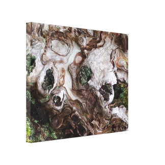 Tree and Moss Canvas Print