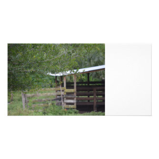 tree and old barn florida photo card