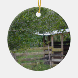 tree and old barn florida photo ceramic ornament