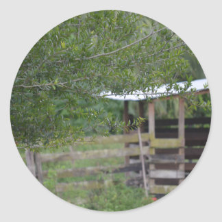 tree and old barn florida photo classic round sticker