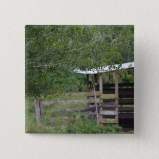 tree and old barn florida photo pinback button